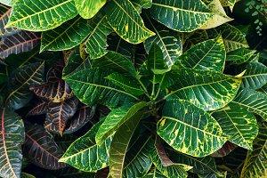 Vertical background of green leaves.jpg