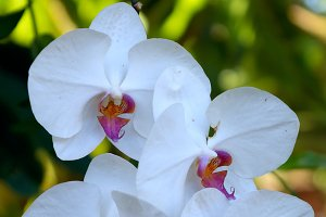 Beautiful white branch of orchid.jpg
