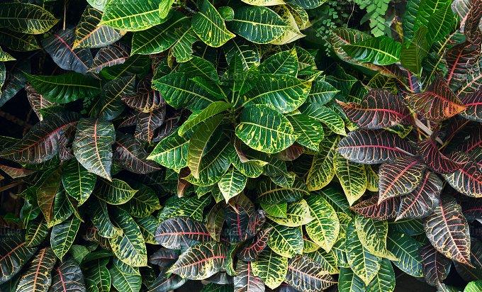 Horizontal background of green leaves.jpg - Photos