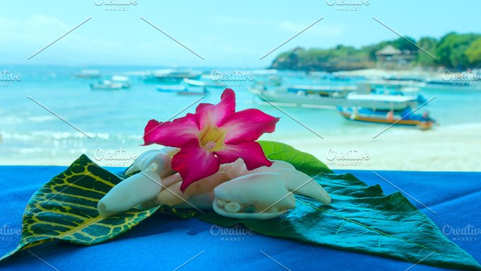 Collage of shells and flowers on the beach.jpg - Photos