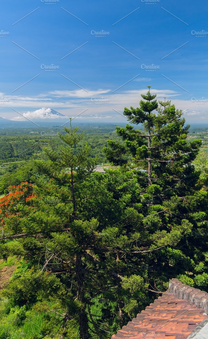 Pine trees on the background of the Balinese landscape.jpg - Photos