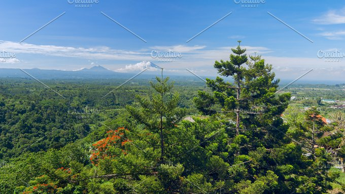 Pine trees on background of the Balinese landscape.jpg - Photos