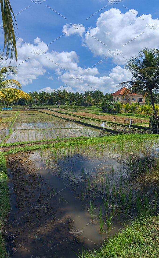 House on rice field at the town of Ubud in Bali.jpg - Photos