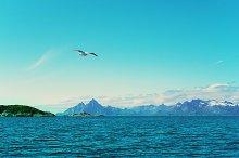 White seagull over Norwegian sea.jpg