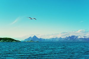 White seagull over Norwegian sea.jpg