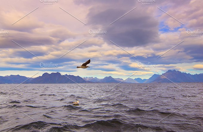 Seagull over Norwegian sea.jpg - Nature