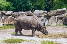 Rhinoceros in the zoo.jpg