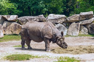 Rhinoceros in the zoo.jpg