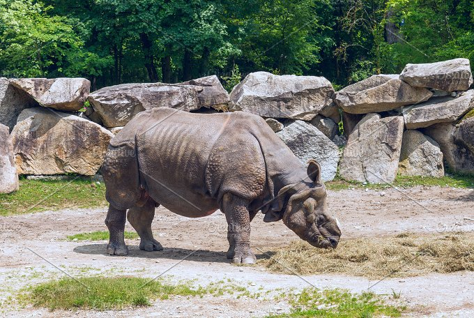 Rhinoceros in the zoo.jpg - Animals