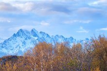 Green forest on the background of mountains.jpg