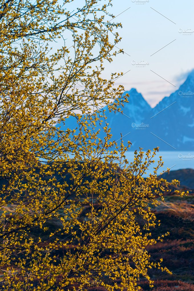 Green bush on background of snow-capped mountains.jpg - Nature