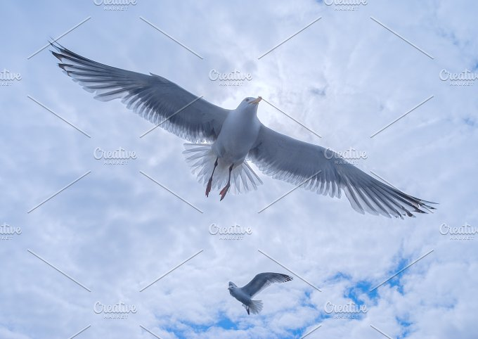 Gulls in the cloudy sky.jpg - Animals