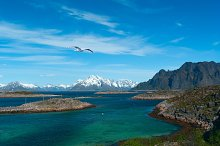 White seagull over sea near norwegian island Skrova.jpg