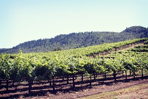 Vineyard Hills, Napa Valley