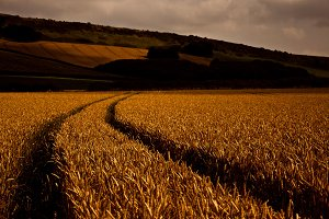 Corn field | Path | Track | Farm