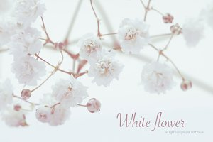 White flower on light background.