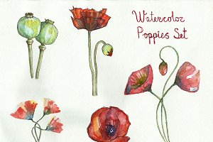 Poppy flowers and seed capsule