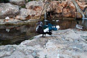 Patos Santa Eulalia del Rio