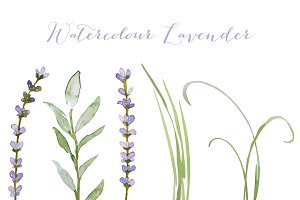 Vector watercolour lavender