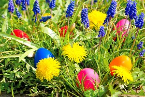 Easter eggs, dandelions and hyacinth