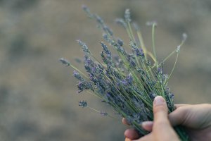 lavender on the hands