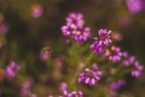 Purple little flowers | Wildflowers
