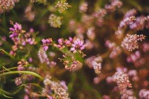 Pink little flowers | Wildflowers