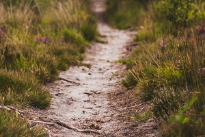 Trail | Track | Path | Nature