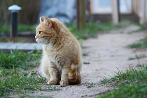 Adorable red cat outdoors