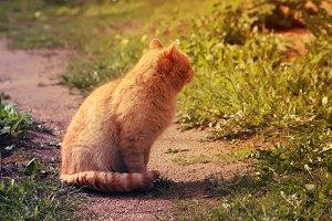 Red cat in the garden.