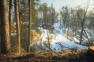 Snow Sprinkled Forest