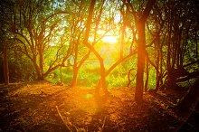 The Bursting Sunlight