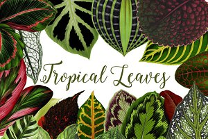 Vintage Tropical Leaves Clipart