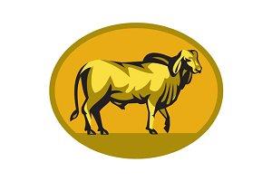 Brahman Bull Oval Retro