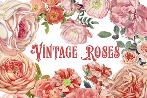 Vintage Watercolor Peach Roses