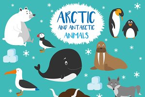 12x Arctic animals Vector Set