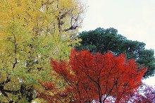 Colorful autumn trees