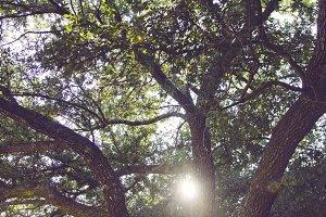 Tree Branches with Sun Peeking