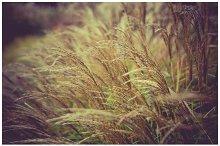iseeyouphoto wintergrass 2.jpg
