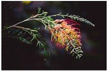 iseeyouphoto hothouseflower.jpg