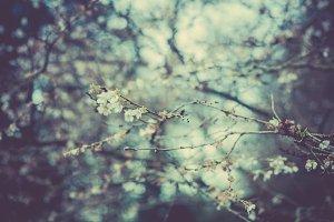 iseeyouphoto winterblossom.jpg