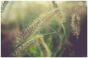 iseeyouphoto wintergrass.jpg