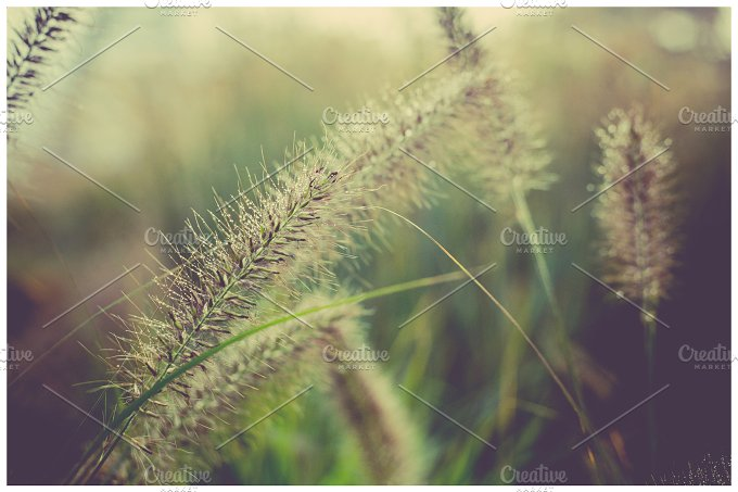 iseeyouphoto wintergrass.jpg - Nature