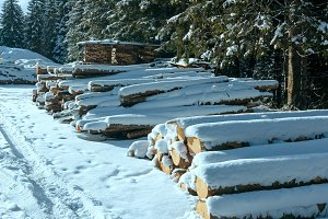 Firewood along country winter road.