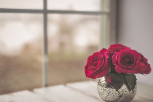 Roses by Window