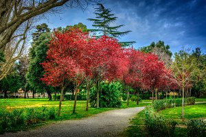 Red Trees in a Park