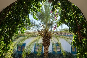 Palm tree fills archway to garden