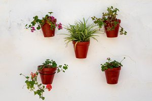 Flowers in plant pots on wall