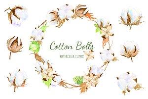 Watercolor clipart cotton bolls