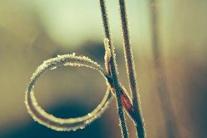 Frosty loop